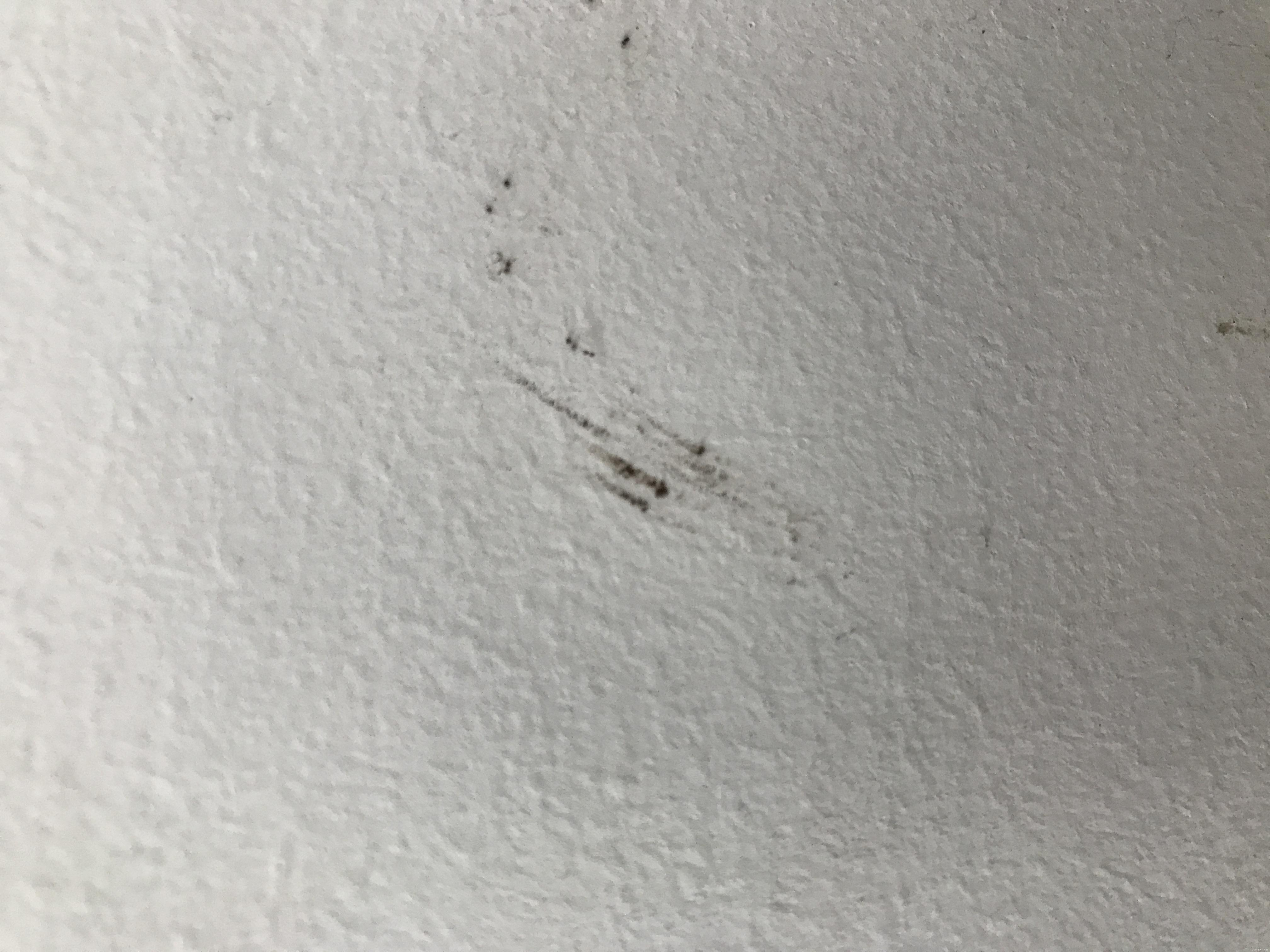 Bed Bug Fecal On Wall Id 171 Got Bed Bugs Bedbugger Forums