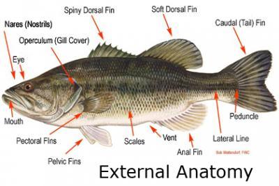 Name of MY edible fish & Fish eating concern